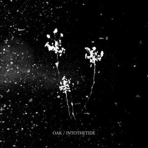 Oak&IntoTheTide